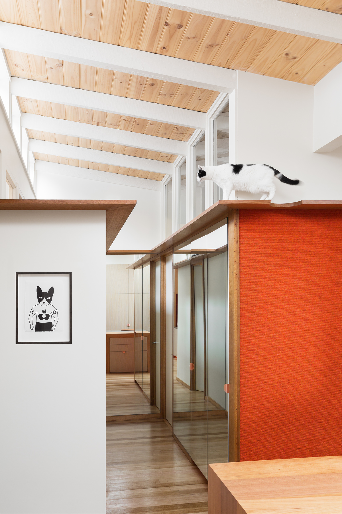 Crazy About Cats? We May Have Found Your Perfect Inner-City Abode...