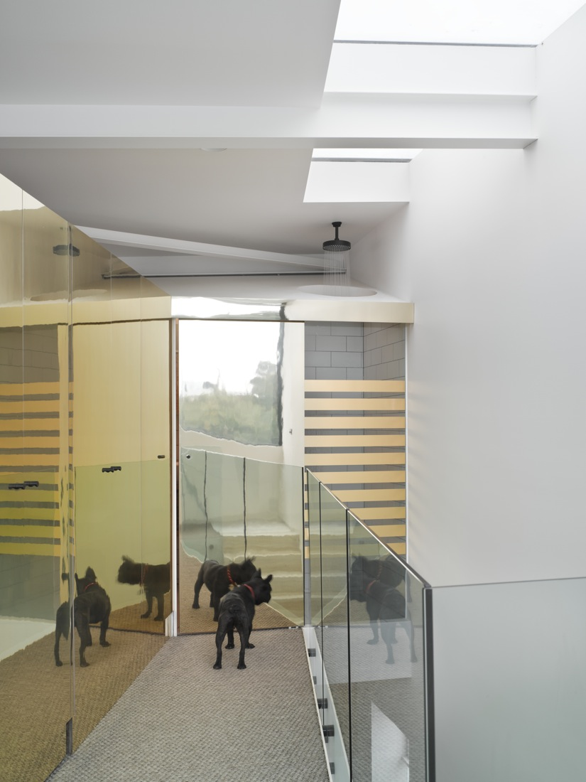 Upstairs at Cubby House, the dog's reflection shows us how the reflection of light is used to make the space feel larger