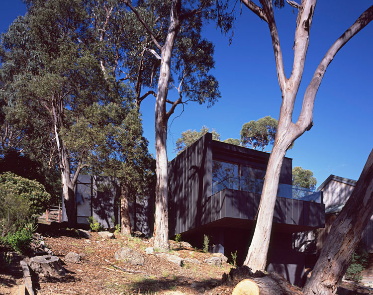 Treehouse is set on a site with a number of established eucalyptus trees overlooking the ocean in Lorne on Australia's Great Ocean Road
