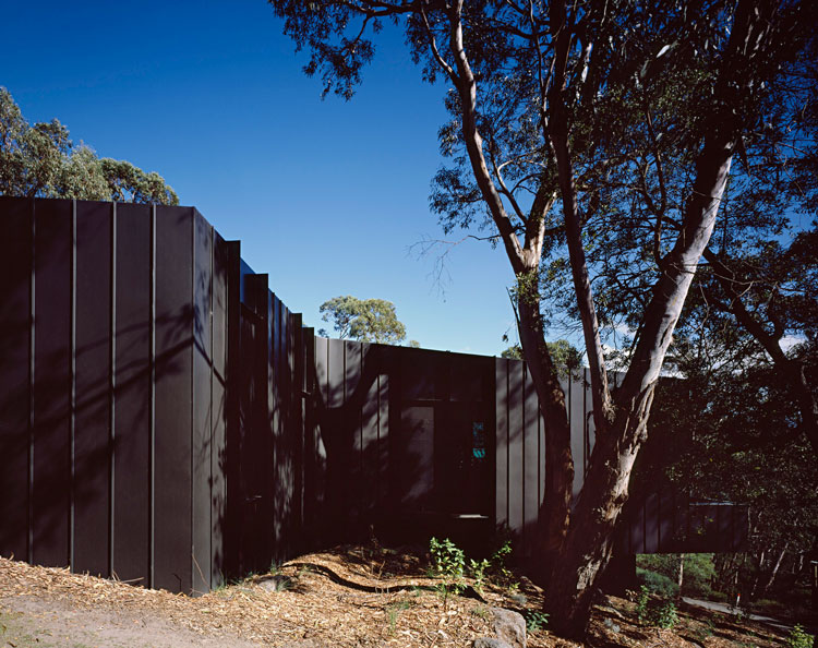 The black timber Treehouse has an asymmetrical plan that wraps around the eucalyptus trees