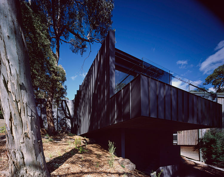 Treehouse is set on a site with a number of established eucalyptus trees overlooking the ocean